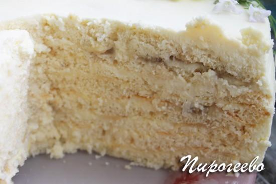 вкусный бисквитный торт в разрезе